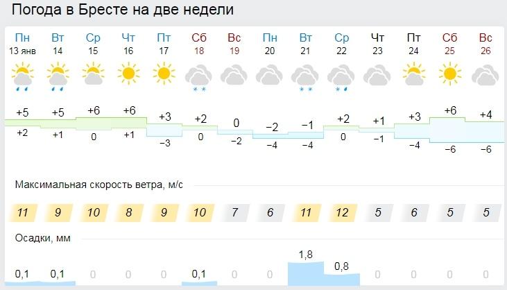 В Беловежской пуще в середине зимы продолжают расти вешенки