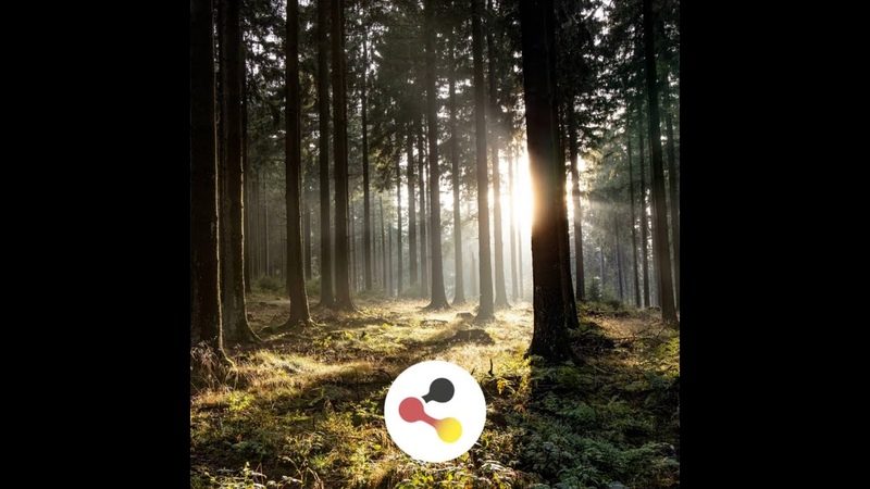 Quickfacts German forest