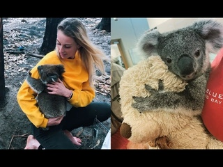 Rescued Poor Baby Koala Losing His Mom After Bushfire Heartbreaking