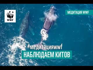 Медитация WWF. Наблюдаем китов