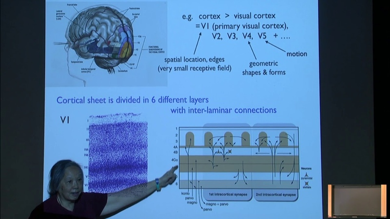 Towards a mathematical model of the brain Lai Sang Young