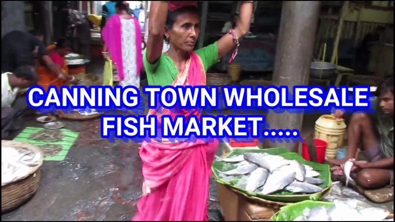 CANNING SUNDARBAN WHOLESALE FISH MARKET   FISH MARKET IN SOUTH 24 PARGANAS, WEST BENGAL, INDIA