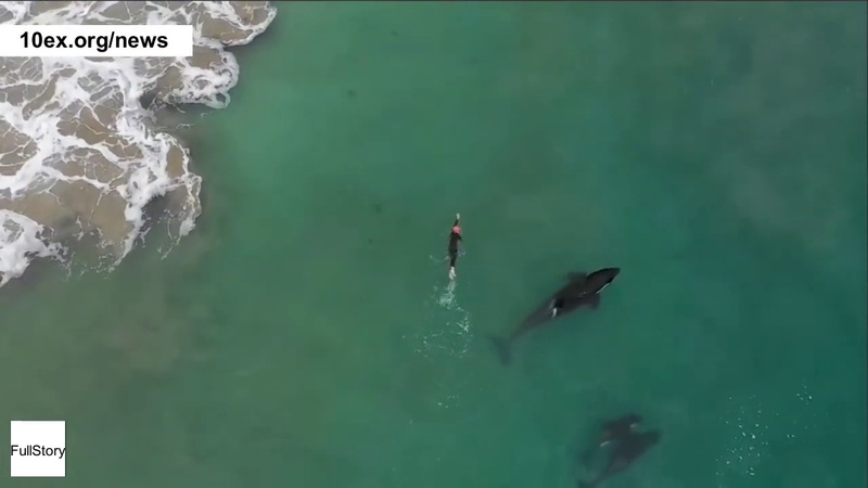 Killer whales approach lone swimmer - как касатки драматически приближаются к одинокому пловцу