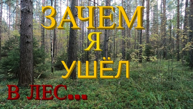 ЗАЧЕМ Я УШЁЛ В ЛЕС...WHY DID I GO TO THE FOREST...