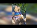Котейки ИЗ ТИК ТОКА \ смешные животные