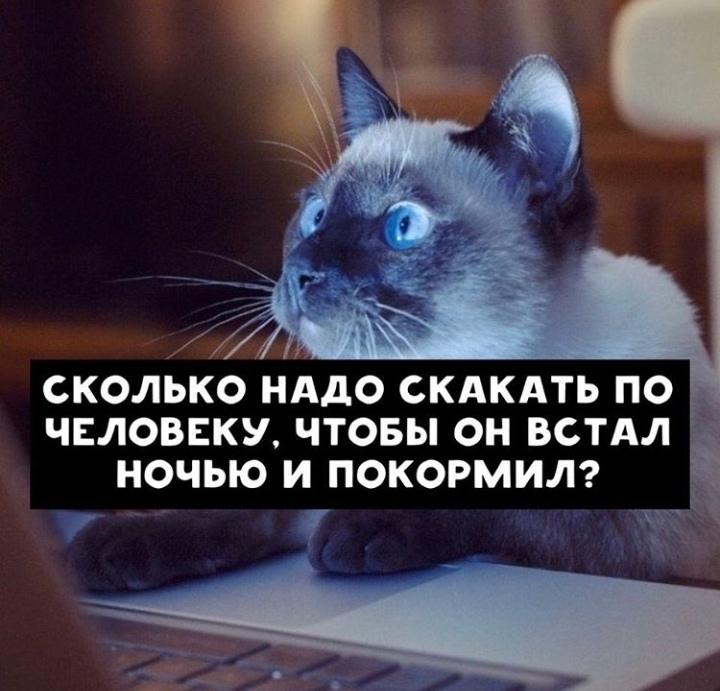 Кошачьи поисковые запросы