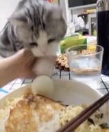 id_16188 — Человек, мне срочно надо это яйцо, ДАЙ!  #gif@bon