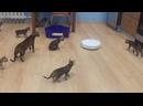 Робот пылесос и котята