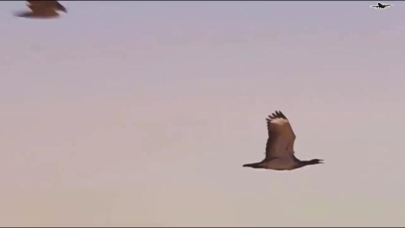 8 Шокирующих Битв Животных Снятых на Камеру 720P HD mp4