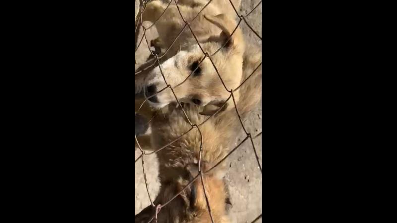 Видео от Натальи Собачкиной