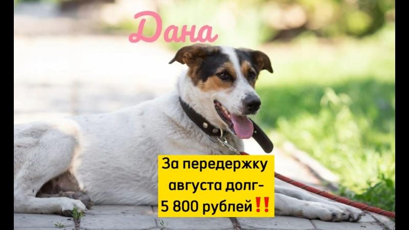 Видео от Ищу хозяина спасённым собакам Самарская область