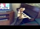 поющая собака.mp4