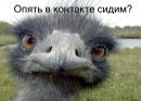 Александра Мерзлякова, 38 лет, Сарапул, Россия