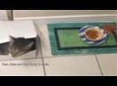 V-s.mobiПриколы и смешные моменты из жизни животных смешное видео про котов и собак.mp4