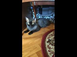 Новый подопечный котик К1464