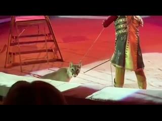 Новогодние пытки животных в цирке. Зритель оплачивает это, покупая билет в цирк.