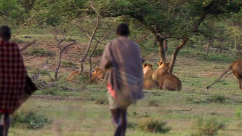 BBC Охота Жизнь с хищниками Заповедник