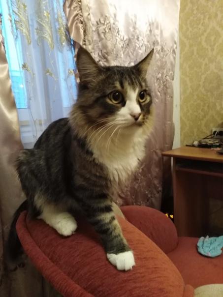 Пропал кот в 7 микрараене! Может кто видел или уви...