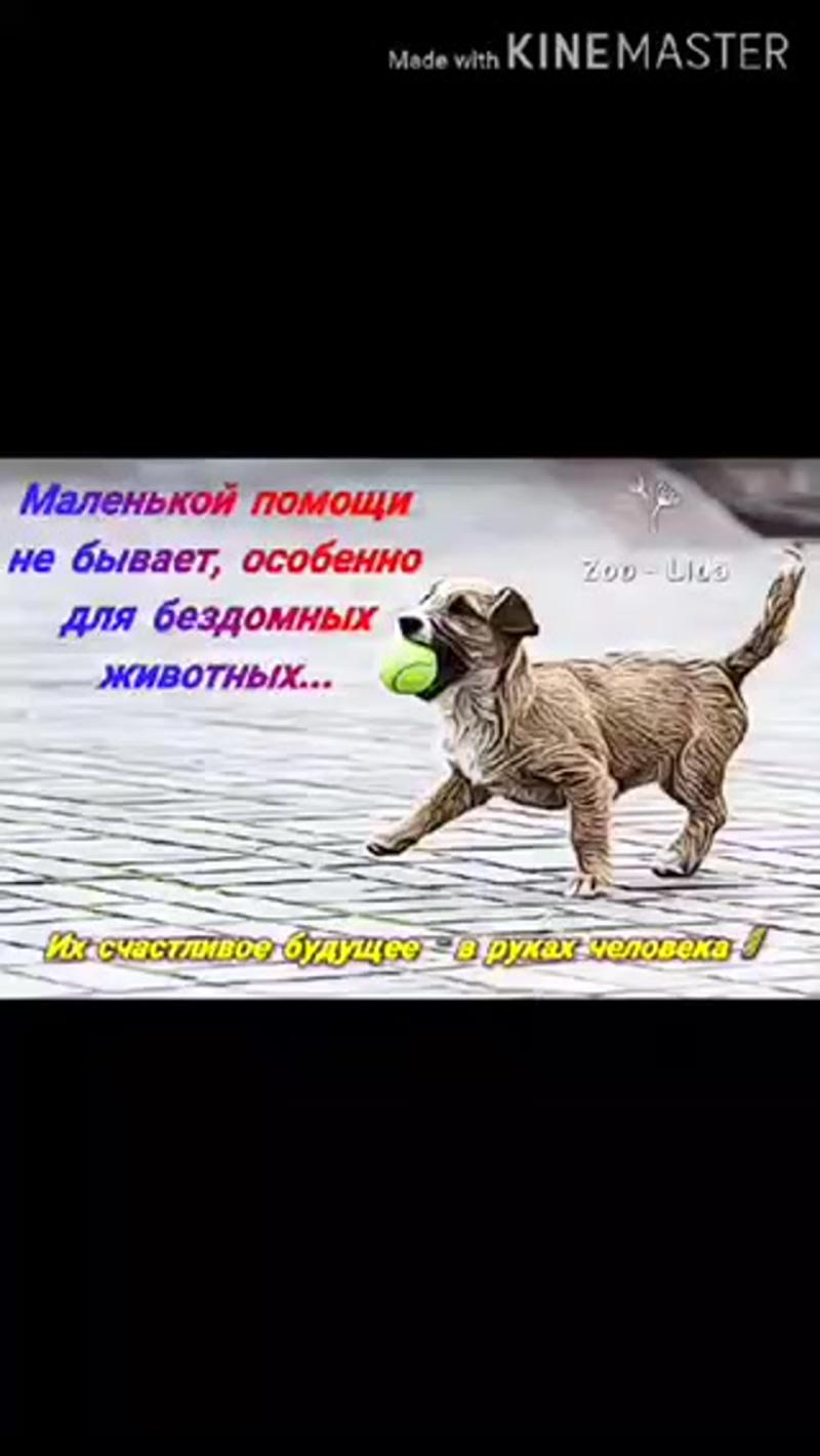 video-712a941035e9c3f71d89c2af281e0aaf-V.mp4