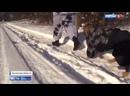 Военный собака стаффордширский Инвалидное перемирие может закончиться новой войной в Донбассе – Россия 24 ☆☆☆ ПИТБУЛИ СТАФФ