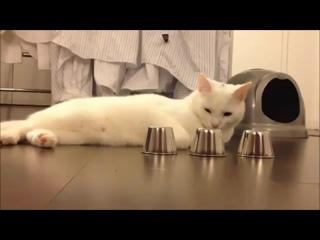 Кручу-верчу, кота запутать хочу [360p] (1)