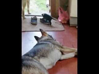 Котоприёмыш пса Дика!😻