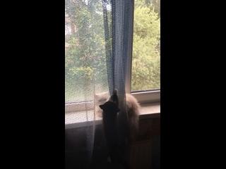 Video by Marina Gorbacheva