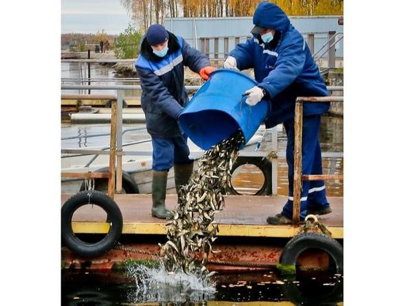 Смоленская АЭС до конца года выпустит в водохранил...