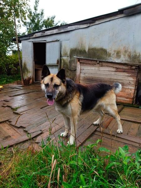 Произошла трагедия в жизни собаки - ушел из жизни хозяин, Рекс остался... Крупный серьезный пес,... [читать продолжение]
