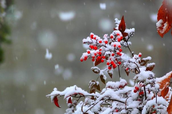 Мокрый снег ожидается в Самарской области 20 октяб...