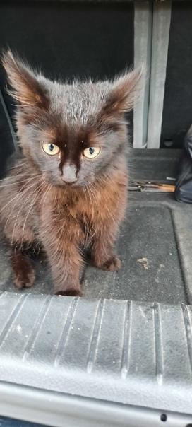 Найден котёнок, примерно 6 месяцев. Район Бехтерев...