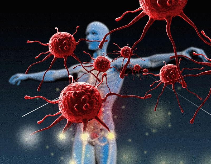 Как проходят биохимические процессы внутри нашего организма