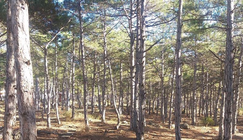 Спасти лес поможет правительственный грант    https://obyektiv.press/node/123458 Севастополь