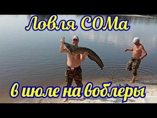 Ловля сома в июле на реке Припять троллингом на воблеры ХАЛКО.
