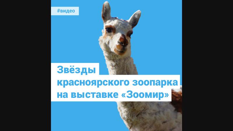 Звёзды красноярского зоопарка на выставке Зоомир