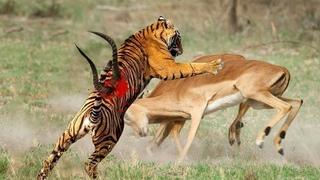 Безумные Битвы Животных, от Которых Мурашки по Коже