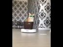 Ганста кот