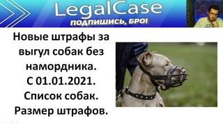 Новые штрафы за выгул собак без намордника. С 1 января 2021. Список пород собак. Размер штрафов.