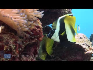 Rainbow Reef 3 HOUR Ambient Underwater Nature Relaxation Film  Music (HD 1080)