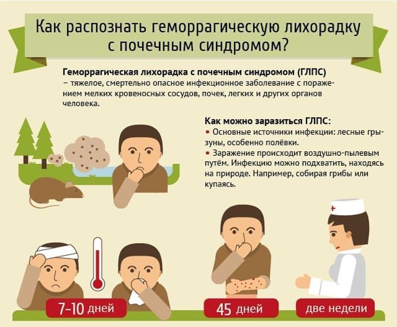 С начала года в Петровском районе зарегистрировали пять случаев мышиной лихорадки