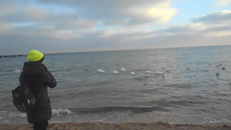 Евпатория Чёрное море лебеди декабрь 2020