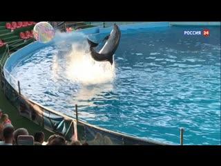 """""""Слезы дельфина"""". Смотрите в выходные новое расследование Эдуарда Петрова"""